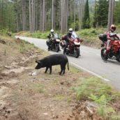 Meer motorrijders deze zomer